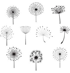 Find Floral Elements for design, dandelions. Vector illustration Stock Images in HD and millions of other royalty-free stock photos, illustrations, and vectors in the Shutterstock collection. Dandelion Drawing, Dandelion Clock, Flower Doodles, Doodle Drawings, Clipart, Painted Rocks, Art Sketches, Flower Art, Line Art
