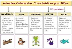 Vertebrates and invertebrates for elementary school children , Science For Kids, Science And Nature, Vertebrates And Invertebrates, Middle School Counseling, Animal Classification, Les Reptiles, Young Animal, Learning Resources, Pet Care