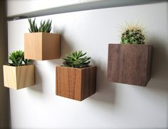 Oh My Ombre, Set of 4 Magnetic Cube Planters or Organizers in Ash, VG Fir, Teak and Walnut, air plants sold separately
