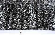 A skier passes gigantic snow covered fir trees on 29 January in Kaltenbrunn (Germany).