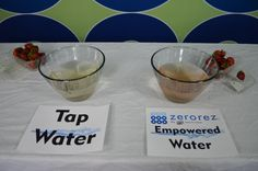 We cleaned two sets of strawberries; one with regular tap water and the other with our Empowered Water™. (both soaked for 5 minutes) While the tap water did remove some dirt from the strawberries the difference is amazing. Which strawberries would you eat? #EmpoweredWater #Strawberries #zerorezphx