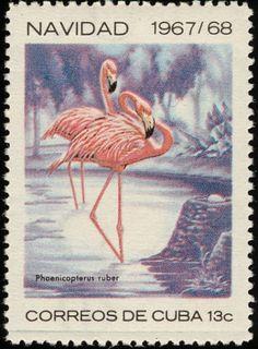 American Flamingo - Cuba stamp