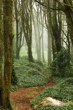 ✯ Path in green forest