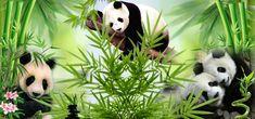 Panda Bear, Animals, Animales, Animaux, Panda, Animais, Panda Bears, Pandas, Animal