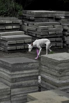 PIERRE HUYGHE | UNTILLED, 2012. INSTALLATION VIEW DOCUMENTA, KASSEL, 2012