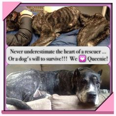 Queenie's Kingdom - Canine Counsel Advocacy https://www.facebook.com/pages/Queenies-Kingdom-Canine-Counsel-Advocacy/584836544860373