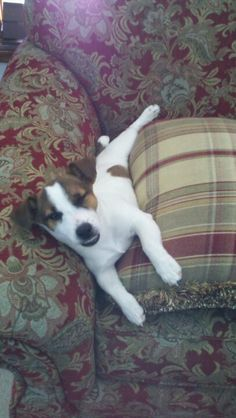 JRT's love hanging out on the couch!
