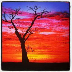 Boab Tree, Kimberleys Australia ~