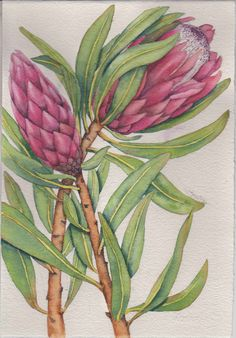 Proteas study. Before painting the background. Original watercolour. By Way Sam.