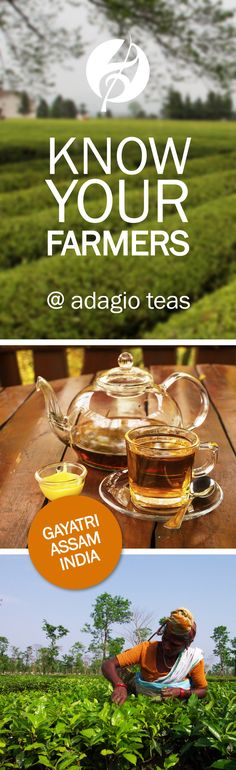 """Assam is a deliciously malty and flavorful black tea, grown only in Assam, India. Our bold yet """"friendly"""" Assam comes from the well-regarded Meleng Estate. Learn more! Detox Drinks, Fun Drinks, Beverages, Tea Places, Tea And Crumpets, Fruit Tea, Ginger Tea, My Cup Of Tea"""