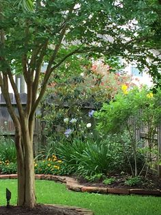 Natchez Trace Crepe Myrtle frames the view of my northern most flower bed.