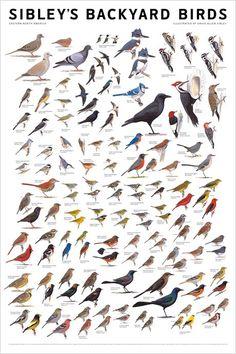 Bird Identification Chart #apartmenttherapy #birding #birdwatching