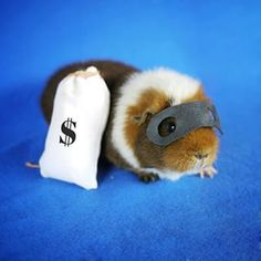 So cute! | These Guinea Pigs Dressed Up As Your Fave Characters Are Way Too Adorable