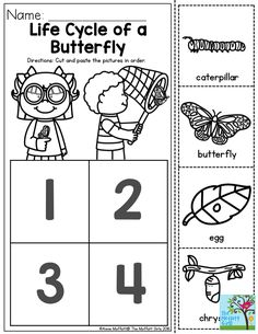 Life Cycle of a Butterfly- You can teach the basic concepts of metamorphosis to children as young as Preschool!  This is a great sequencing activity! Preschool Worksheets, Sequencing Activities, Preschool Lessons, Preschool Learning, Preschool Classroom, Preschool Activities, April Preschool, Caterpillar Preschool, Hungry Caterpillar