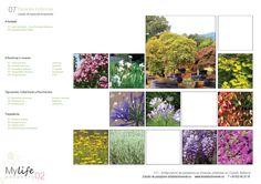 Plano de selección de especies vegetales