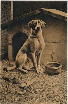 Vintage dog photo, dog smoking a pipe, waakhond, 1911