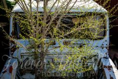 Toyota Land Cruiser Tree Photo www.foreverbutterflies.com