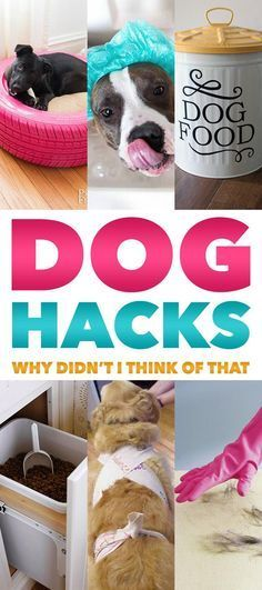 Dog Hacks Why Didn't I Think Of That. Tons of Dog Hacks that will make your Dog Happy and You! Pet Dogs, Dogs And Puppies, Chihuahua Dogs, Puppies Stuff, Rottweiler Puppies, Game Mode, Animals And Pets, Cute Animals, Dog Hacks