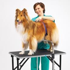 I want one of these!  This would work so much better for my shelties than a grooming arm.