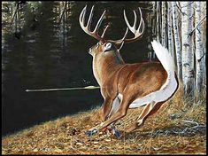 Bowhunting - Where can I find a certain whitetail deer painting? - I know this is a little off of deer hunting, but in a way it is. Whitetail Deer Pictures, Whitetail Deer Hunting, Deer Photos, Deer Pics, Whitetail Bucks, Hunting Art, Bow Hunting, Hunting Stuff, Hunting Guns