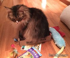 Elisa - Nuvole di Bellezza: Unboxing February 2015 Multi-Cat KitNipBox