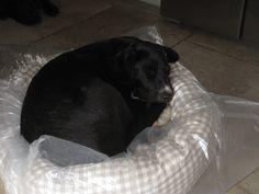Socks on a Donut Bed #happycustomer #happydog
