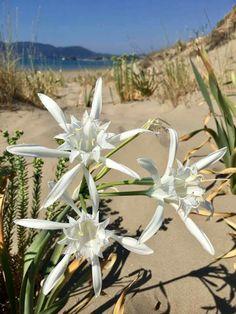 Daffodil Flowers, Daffodils, Wind Turbine