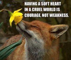having a soft heart in a cruel world is courage, not weakness #vegan