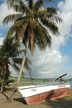 Palm tree and boat, Baracoa, Cuba