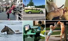 Hilarious and heart-warming displays of teamwork from around the world #DailyMail