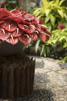 Janice Parker Landscape Architects, established in is a premier landscape architecture firm servicing New York City, the Hamptons and Connecticut. Kips Bay Showhouse, Landscape Architecture, The Hamptons, Succulents, Plants, Succulent Plants, Plant, Planets, Landscape Design