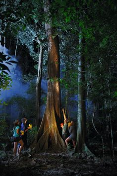 Night-time Adventure Walks, Jungle Surfing Canopy Tours, borders the Daintree National Park, 2.5 hours north of Cairns, Queensland, #Australia More: http://www.junglesurfing.com.au