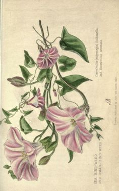 Weeds and wild flowers : - Biodiversity Heritage Library