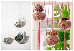 07-diy-plantas-colgantes-peceras