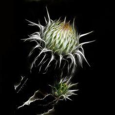 (1765) Natura abstracta