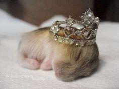 baby hamster princess