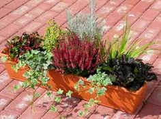 Planted balcony box 80 cm wintergreen in the watering box Hanging Flower Baskets, Winter Plants, Spring Projects, Container Flowers, Autumn Garden, Balcony Garden, Backyard Landscaping, Container Gardening, Fall Decor