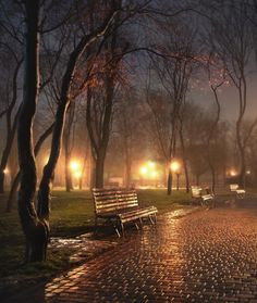Outdoors Discover Illuminated Park at Night Nature Pictures Beautiful Pictures Beautiful Places Rain Photography Amazing Photography I Love Rain Autumn Rain Fall Images Rainy Night