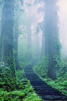 a foggy walk