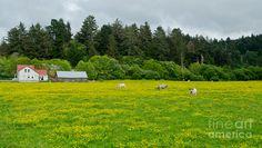 Rural California Landscape Photograph