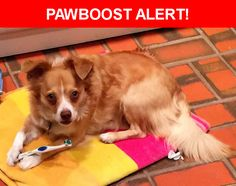 Please spread the word! Dexter was last seen in Dallas, TX 75231.    Nearest Address: Blackwood Drive, Dallas, TX, United States
