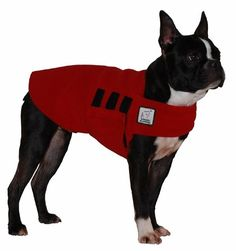 The Boston Terrier Tummy Warmer is equivalent to a light dog sweater that has multiple uses.