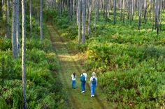 Bayard Conservation Area (SE of Green Cove Springs) 10 mile trail.