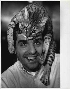 1992 Rum Tum Tugger a twenty pound Bengal Cat plays on owners head Press Photo | eBay