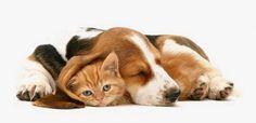 outubro rosa animais cadelas e gatas veterinaria dra ana elisa sulzer (2)