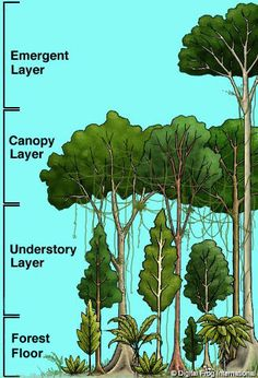 Waverton Community Primary School ::: Pupil Zone ::: Year 6 ::: Rainforest ****