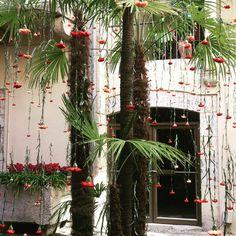 Flors a Girona