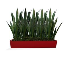 A collection of tabletop planters offered from select designer Jay Scotts. - Classic, clean shapes for versatility and ease in planting - Made from high-quality fiberglass for indoor or outdoor use