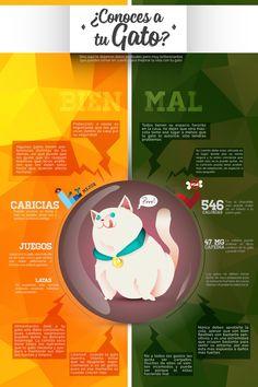 Infografia de Gatos