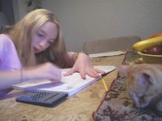 Ten Unschooling Myths Debunked - Yahoo! Voices - voices.yahoo.com